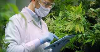 cannabis-and-hemp-testing-lab-california