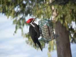 unique-and-profitable-birds-food-and-supplies-not-disclosed-california