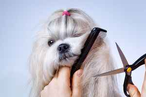 pet-grooming-business-kentucky