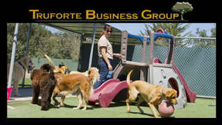 dog-boarding-and-grooming-fort-myers-florida