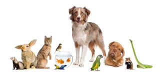 Online pet supply store, open 24 /7 ecommerce