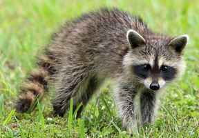 Wildlife Removal Business for Sale - Mountains