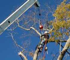 tree-service-company-for-sale-georgia