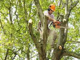 tree-removal-business-in-central-alabama-for-sale