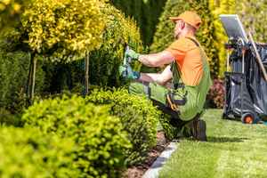 lawn-and-landscaping-florida