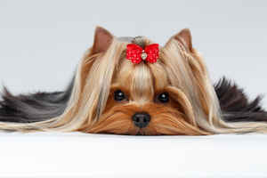 Full-Service Pet Grooming Business -Manager In Pl.