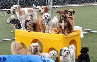 Well Established Dog Daycare with Real Estate
